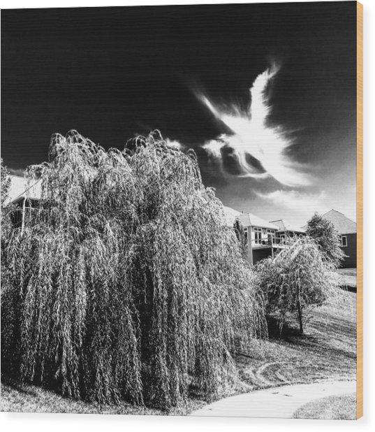 Angel In The Sky Wood Print