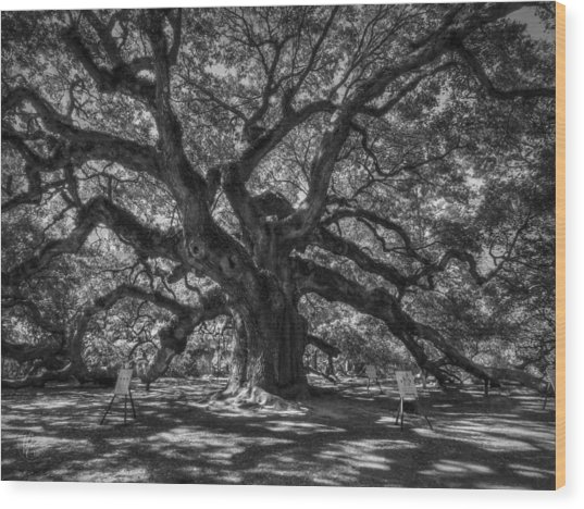 Wood Print featuring the photograph Angel Oak 002 by Lance Vaughn