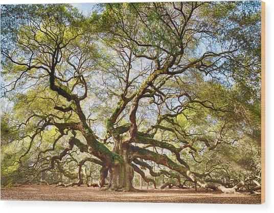 Angel Oak In Spring Wood Print