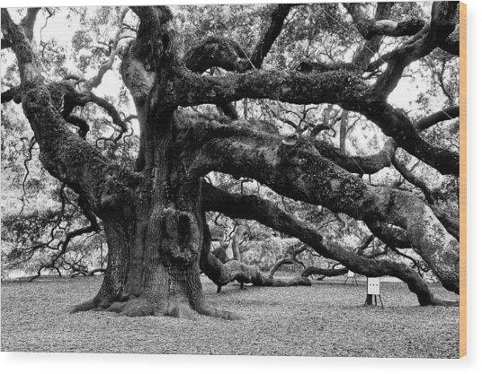 Angel Oak Tree 2009 Black And White Wood Print