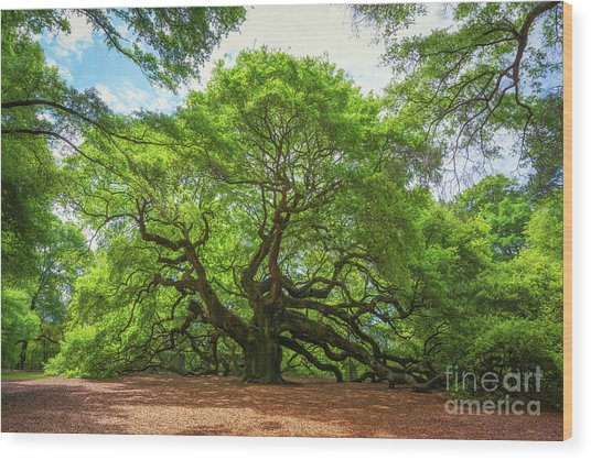 Angel Oak Tree In South Carolina  Wood Print