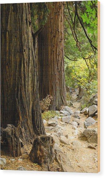 Angel Trail Wood Print by Marian Kraus