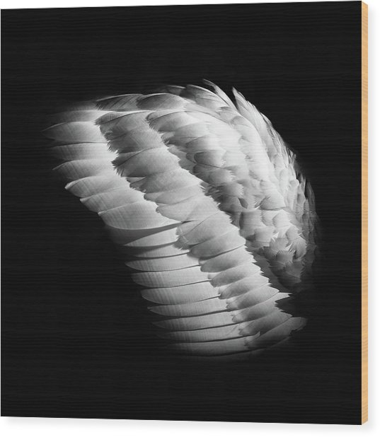 Angel Wing Wood Print