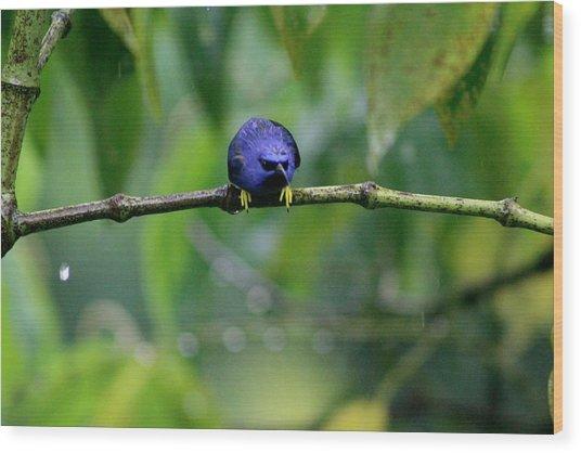 Poor Hummingbird Caught In The Rain Wood Print