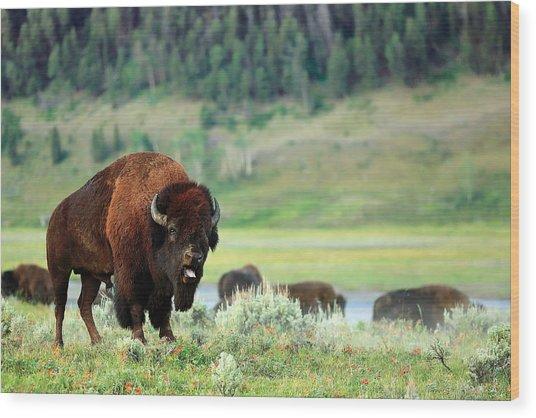 Angry Buffalo Wood Print