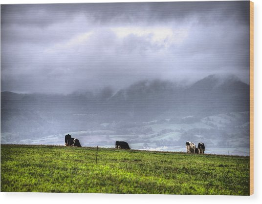 Animals Livestock-03 Wood Print