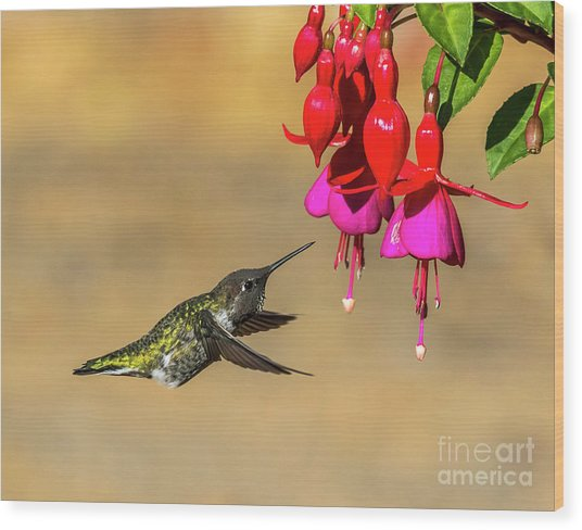 Anna And Hardy Fuchsia Flower Wood Print