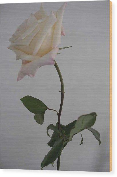 Anna Rose Wood Print by Nancy Ferrier