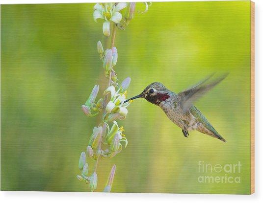 Anna's Hummingbird Wood Print by Emily Bristor