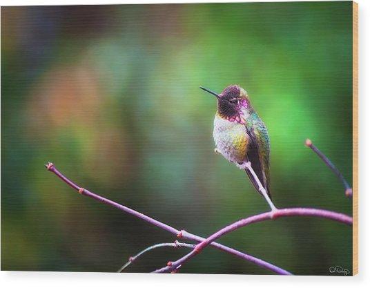 Anna's Hummingbird I Wood Print