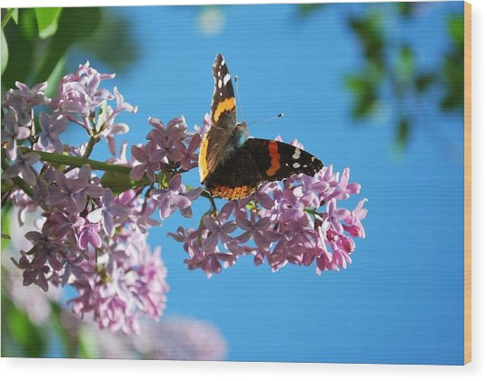 Annie's Butterfly Wood Print