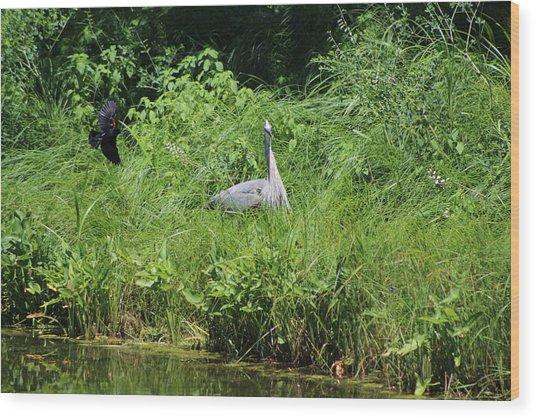 Annoyed - Heron And Red Winged Blackbird 1 Of 10 Wood Print