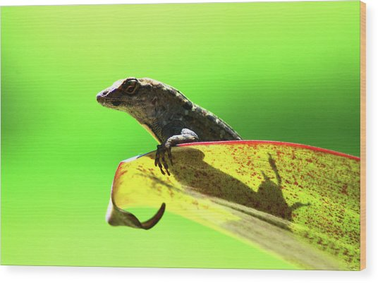 Anole In Green Wood Print