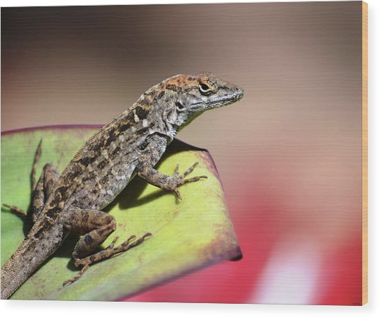 Anole In Rose Wood Print