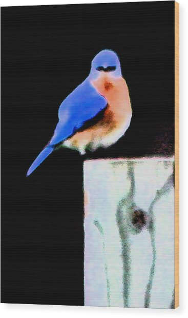 Another Angry Bluebird Wood Print by Alan Skonieczny
