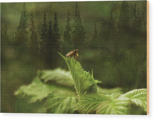 Another Day Wood Print by Terrie Taylor