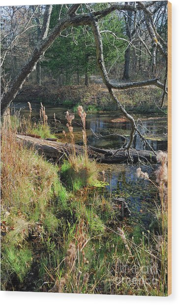 Antelope Springs Ix Wood Print by Ron Cline