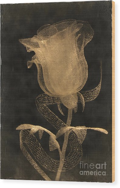Antique Rose Of Glass Wood Print