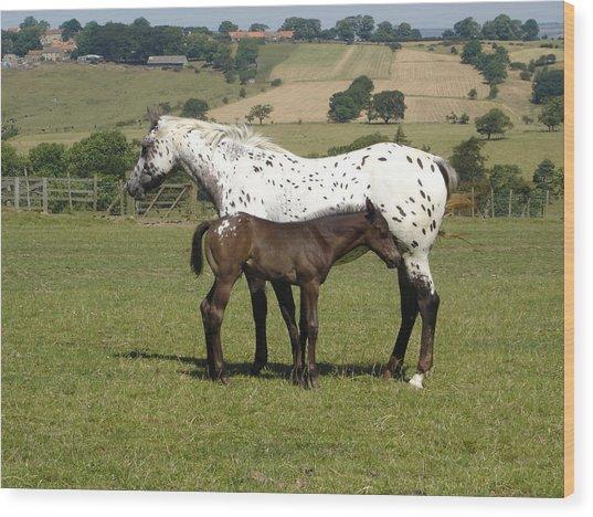 Appaloosa Mare And Foal Wood Print