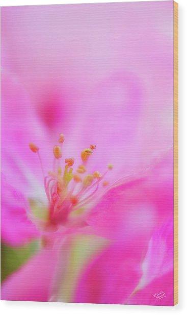 Apple Blossom 1 Wood Print by Leland D Howard