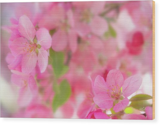 Apple Blossom 4 Wood Print by Leland D Howard