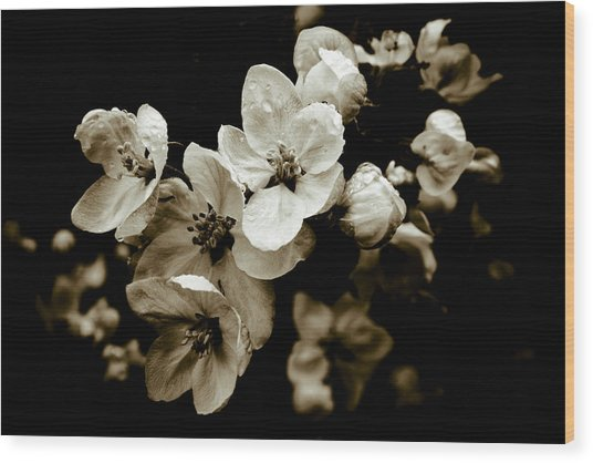 Apple Blossom Wood Print by Frank Tschakert