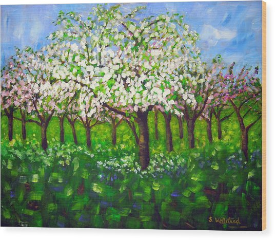 Apple Blossom Orchard Wood Print