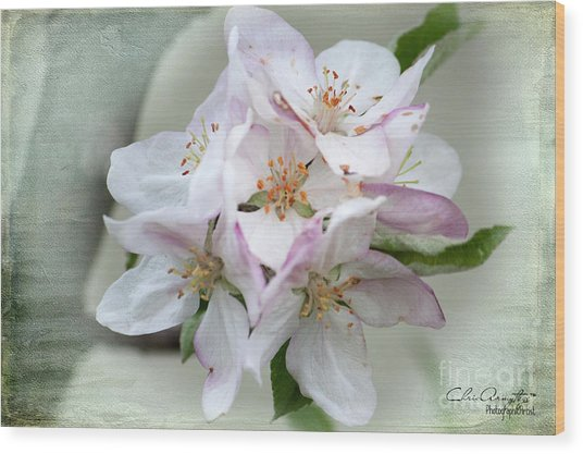 Apple Blossoms From My Hepburn Garden Wood Print