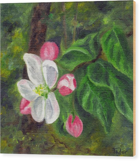 Apple Blossoms Wood Print