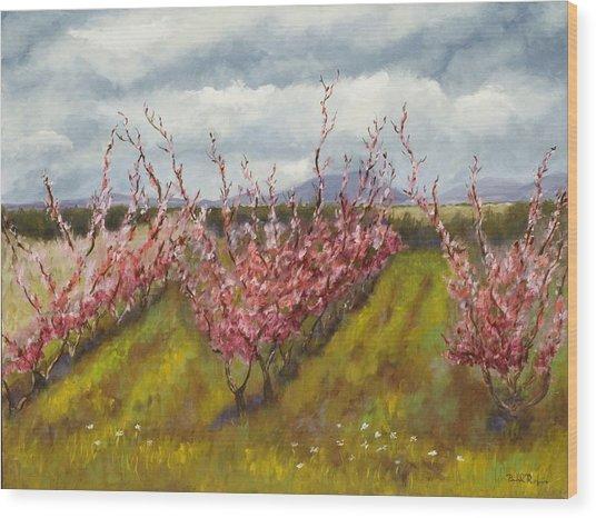 Apple Hill Springtime Wood Print by Brenda Williams