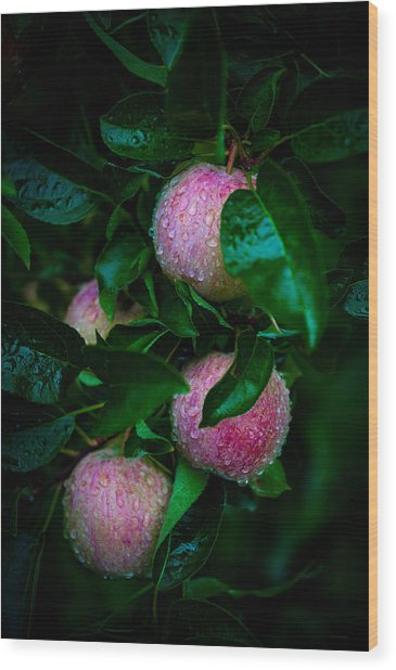 Apples After The Rain Wood Print
