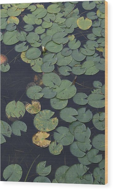 Approaching Lilly Wood Print by Alan Rutherford