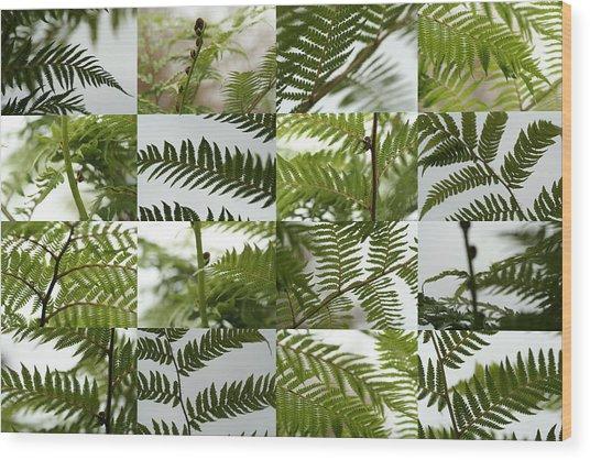 April Ferns 2 Wood Print