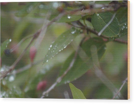 Wood Print featuring the photograph April Showers 1 by Antonio Romero