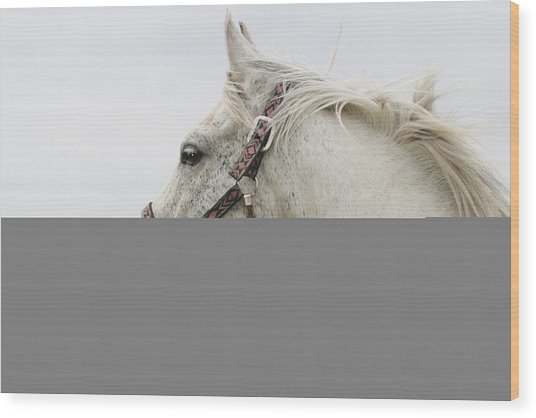 Arabian Horse Portrait Wood Print by Laurie With