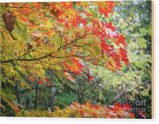 Arboretum Autumn Leaves Wood Print