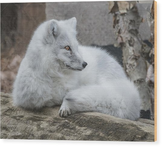 Arctic Fox Profile Wood Print