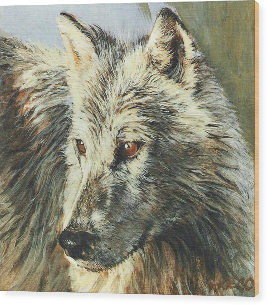 Arctic Wolf Wood Print by Steve Greco