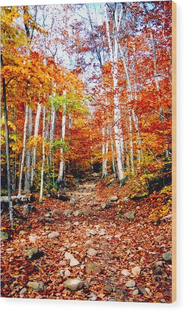 Arethusa Falls Trail Wood Print