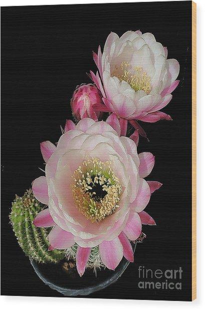 Arizona Desert Cactus Flowers Wood Print