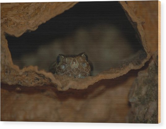 Arizona Diamondback Rattlesnake Wood Print by Susan Heller