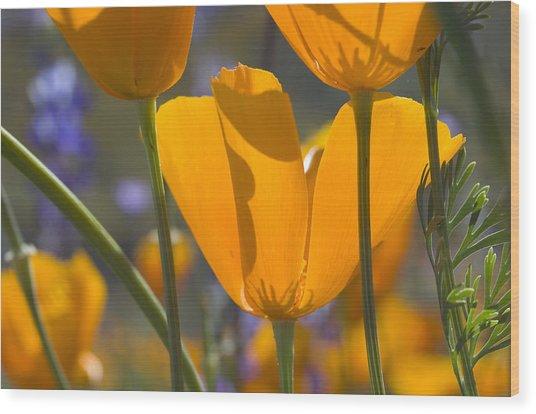 Arizona Spring Color Wood Print
