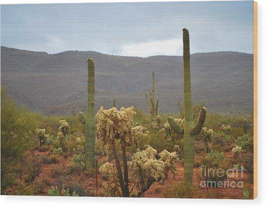 Arizona's Sonoran Desert  Wood Print