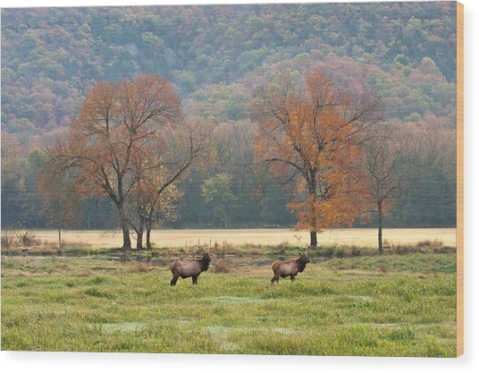 Arkansas Elk - 7802 Wood Print