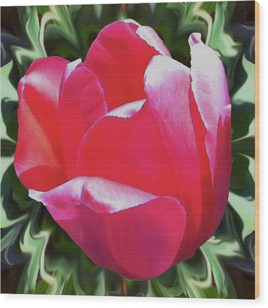 Arlington Tulip Wood Print