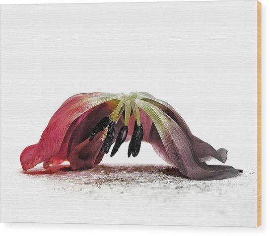 Ars Moriendi Wood Print