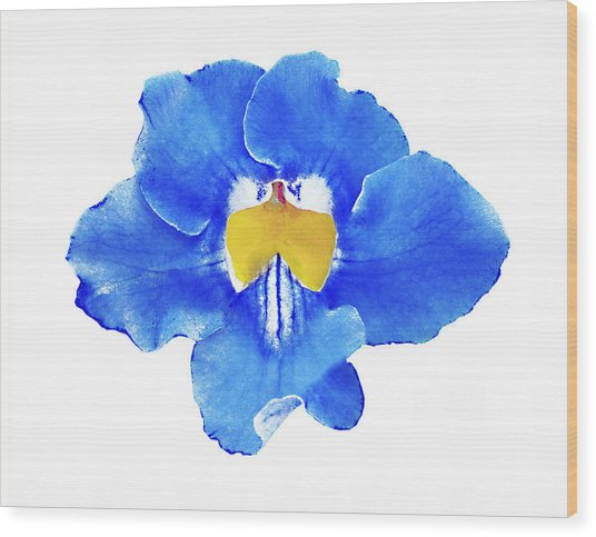 Art Blue Beauty Wood Print
