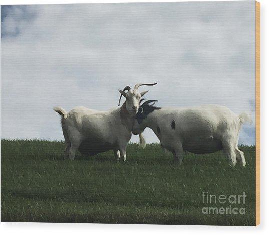 Art Goats I Wood Print