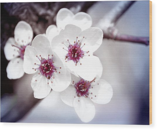 Art Of Spring Wood Print
