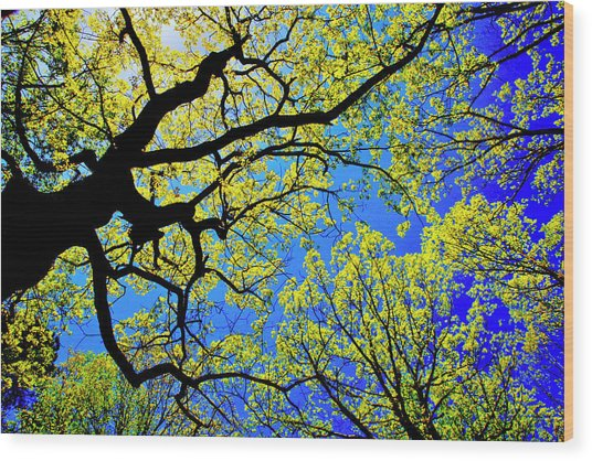 Artsy Tree Canopy Series, Early Spring - # 01 Wood Print